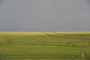 Vast open spaces - Serengeti wm