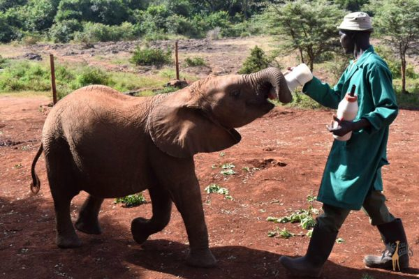 David Sheldrick Elephant Orphanage WM