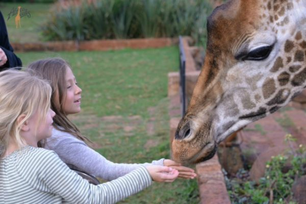 Feeding giraffes at Giraffe Manor 2 WM
