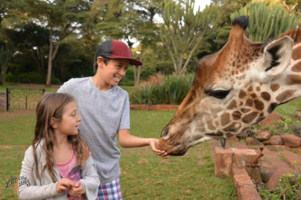 Feeding Giraffes at Giraffes Manor
